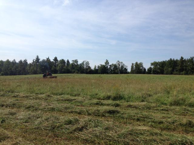 hayfield 1